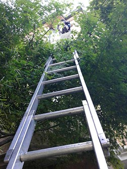 ladder through the trees